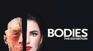 bodies-1